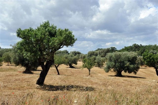 Masseria Met Trullo En Zwembad Puglia 1 (37)