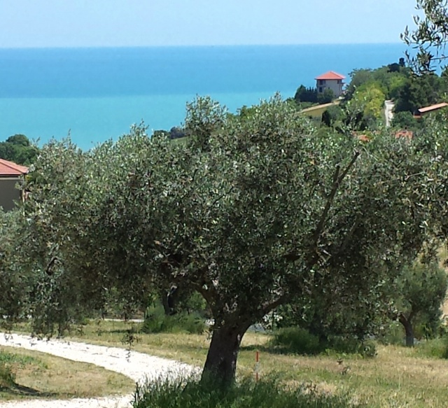 10 Benedenwoning Met Omheind Zwembad Abruzzo