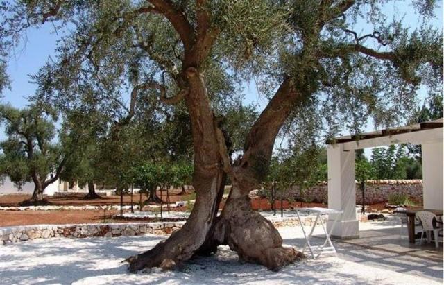 20170725041434Landgoed Trullis Puglia 2e