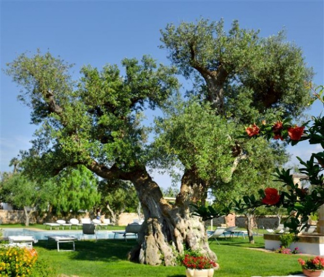 Landgoed Trullis Puglia 49