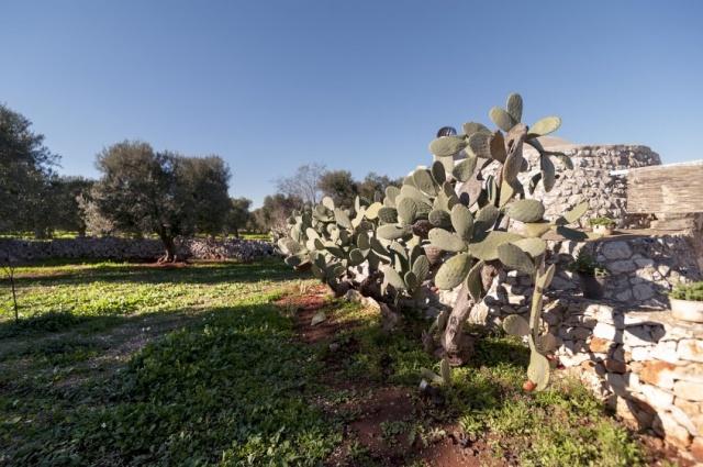Luxe Moderne Vrijstaande Villa Puglia 18