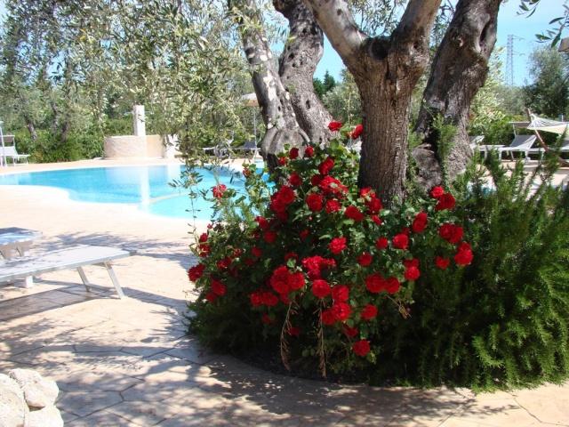 Puglia Gargano Vakantie Park Met Zwembad En Restaurant 9