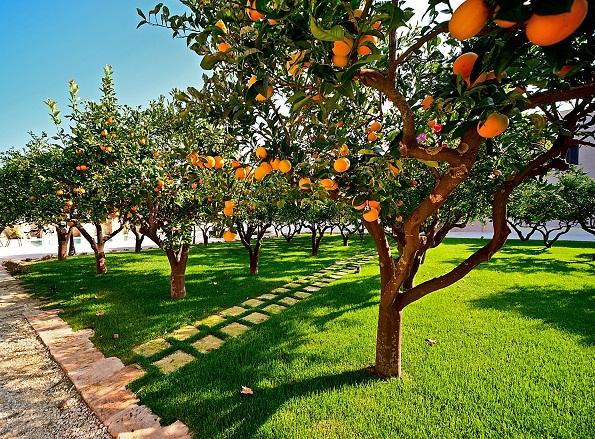 Luxe Resort Met Zwembad Aan De Kust Zuid Puglia 13