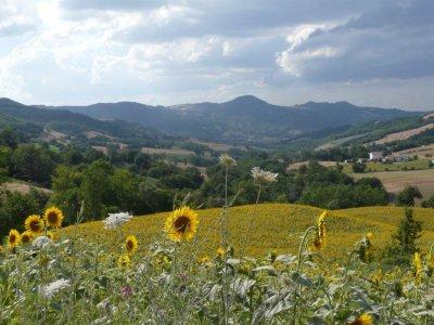 landschap Le Marche Pesaro urbino